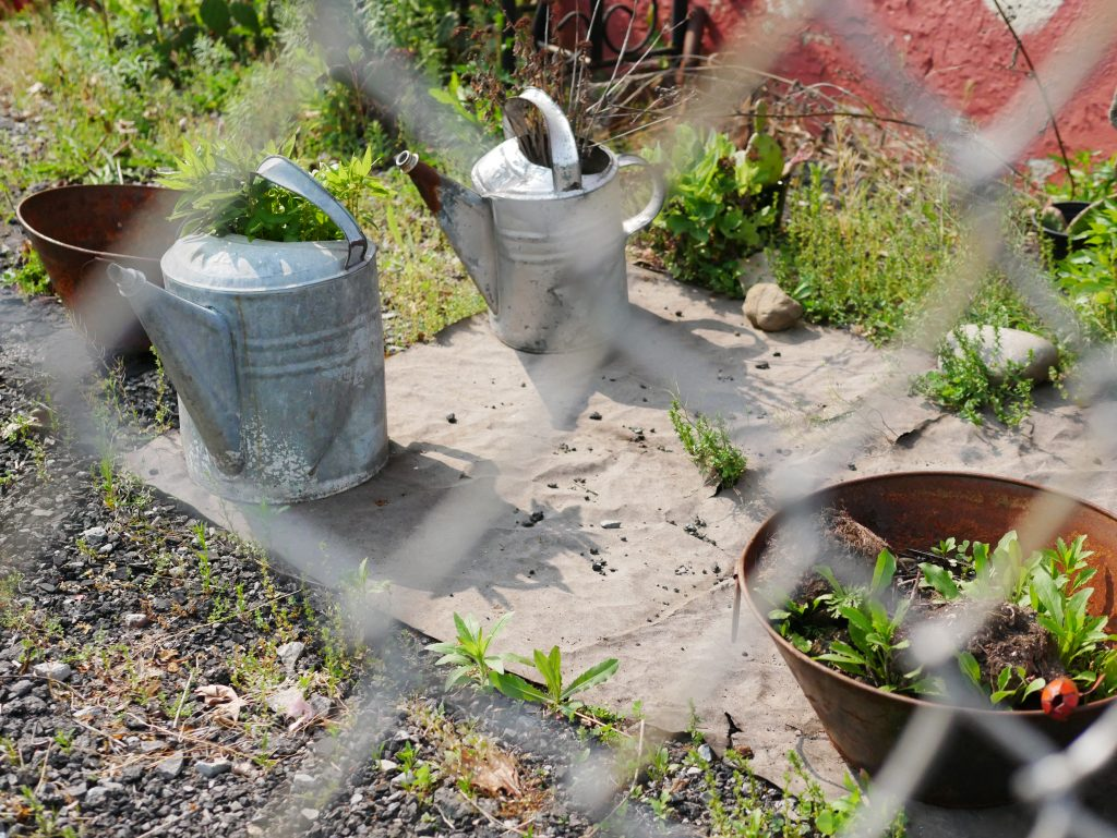 two watering cans and two planters sit on a pad of concrete, viewed through a chain-link fence