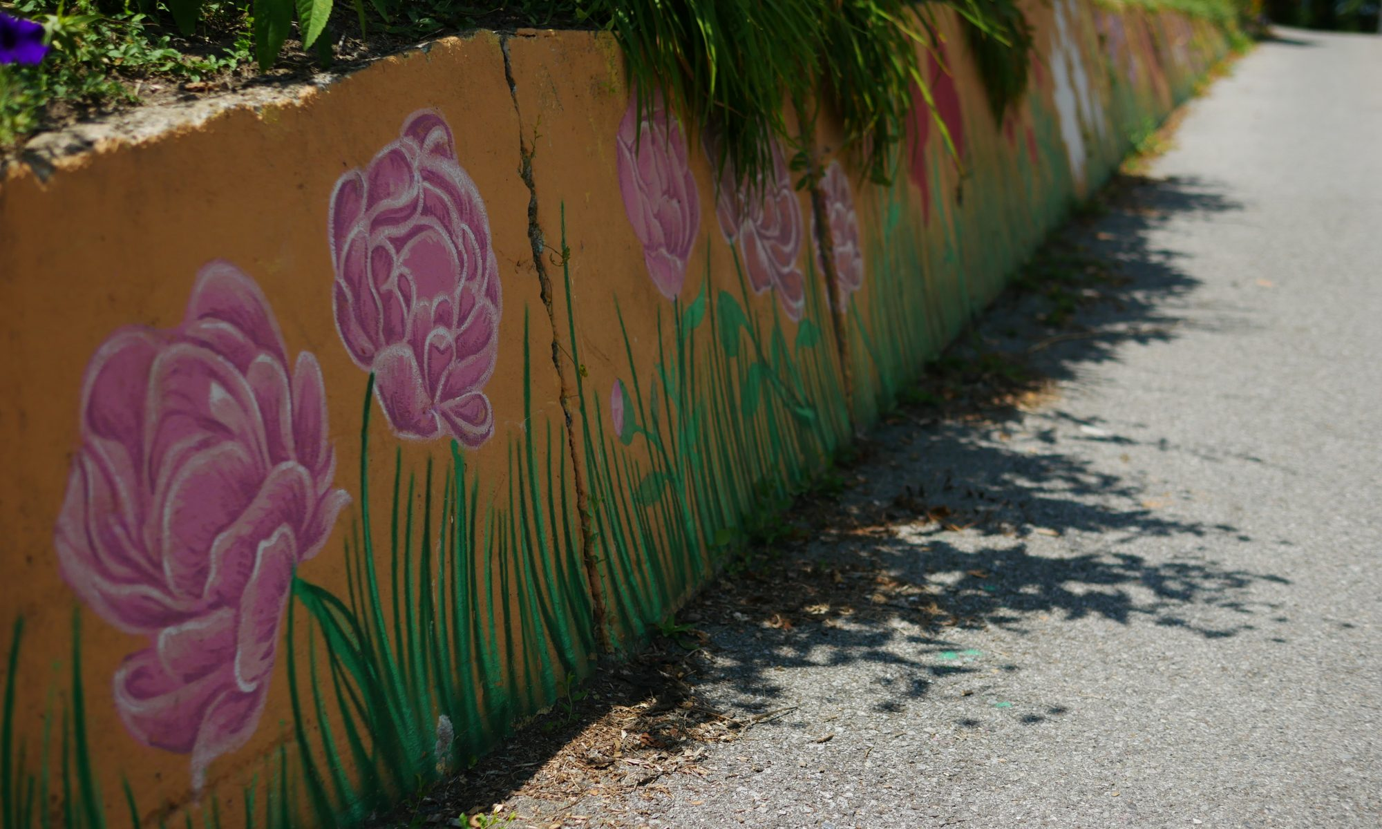 pink painted flowers adorn an urban driveway