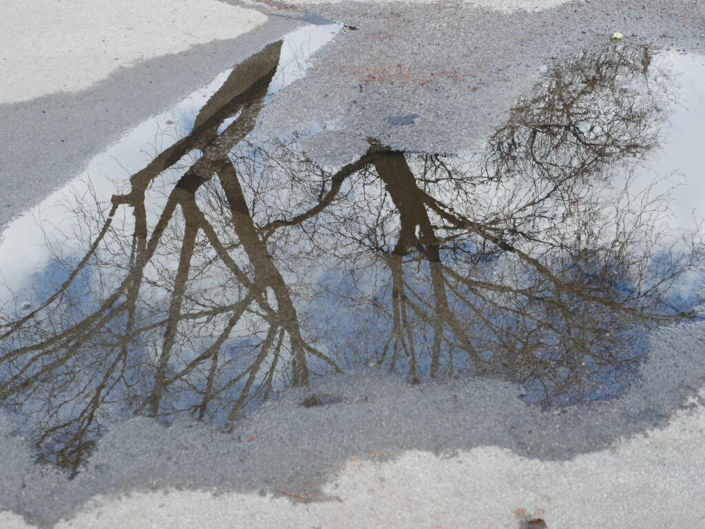 a reflection of a tree in a puddle