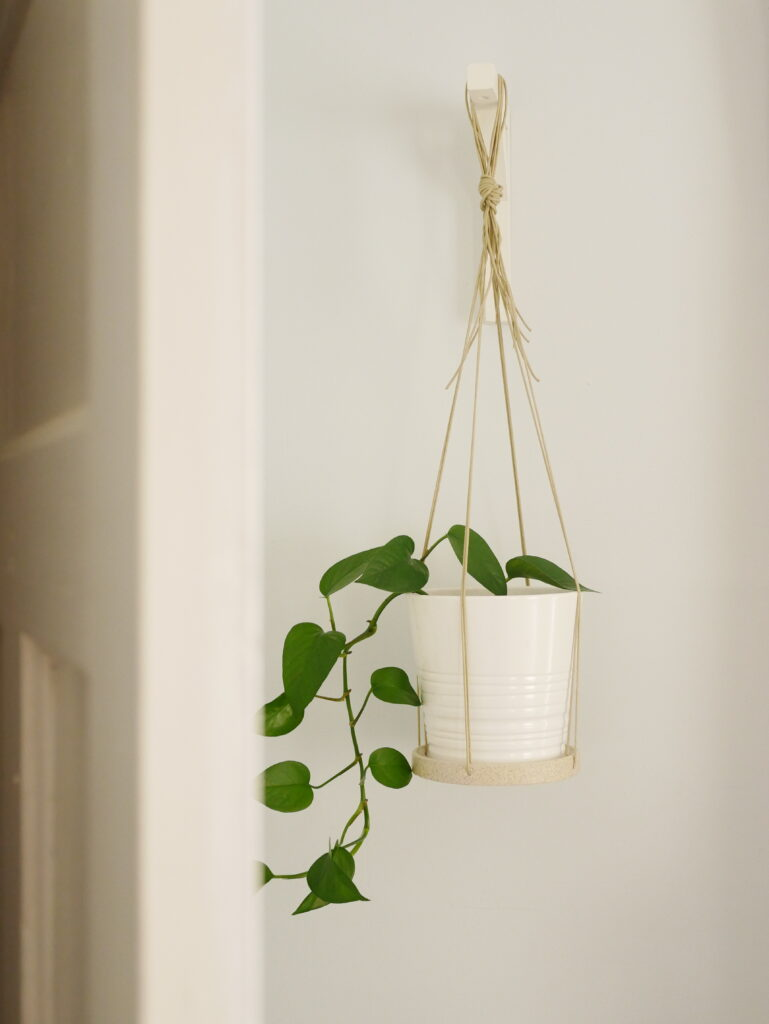 a pothos plant hangs in a ceramic pot on a wall